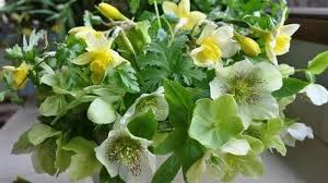 Rau ăn hoa