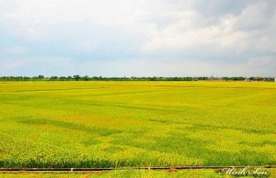 Quy trình thực hành sản xuất nông nghiệp tốt(VietGAP) cho lúa