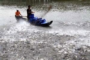 Hỏi đáp về VietGAP trong nuôi trồng thủy sản