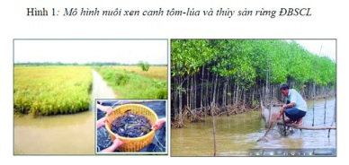Thông tư số 54/2014/TT-BNNPTNT Quy định điều kiện, trình tự công nhận các tiêu chuẩn thực hành nông nghiệp tốt khác trong nông nghiệp, lâm nghiệp, thủy sản