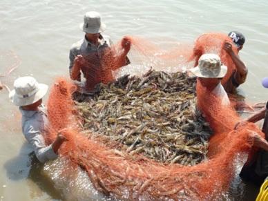 Quy phạm thực hành nuôi trồng thủy sản tốt tại Việt Nam (VietGAP)