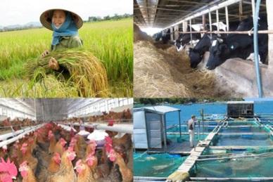 Quy định về chứng nhận sản phẩm thủy sản, trồng trọt, chăn nuôi được sản xuất, sơ chế phù hợp với Quy trình thực hành sản xuất nông nghiệp tốt