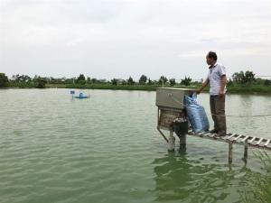 Lão nông nuôi cá thành công nhờ nhiều lần nằm vật ở bờ ao