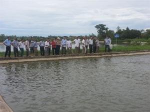 Phổ biến kiến thức nuôi cá rô phi VietGAP