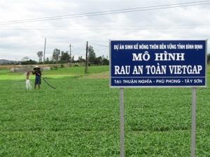 Lan tỏa phong trào trồng rau an toàn VietGAP