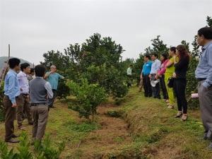 Hà Tĩnh thâm canh vườn cam đạt tiêu chuẩn VietGAP