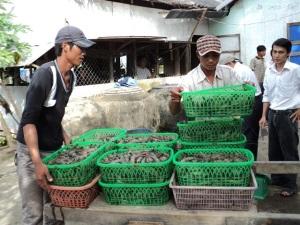 Nhiều mô hình hay giúp nông dân Kiên Giang thu nhập khá