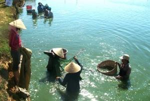 Tôm Bình Định giảm dịch bệnh, tăng năng suất