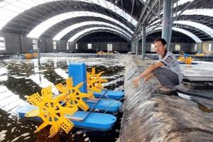 Người nuôi tôm lớn nhất xứ Quảng và giấc mơ thuê thêm đất mở rộng quy mô