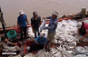 Bạc Liêu: Tăng sản lượng nuôi trồng, khai thác thủy sản