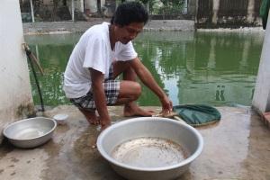 Sản xuất cá Koi giống, thu lãi 300 triệu đồng/năm