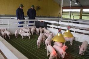 Nơi lưu giữ, tuyển chọn những giống lợn ngoại