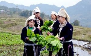 Nông sản sạch trên đỉnh Hồng Thái