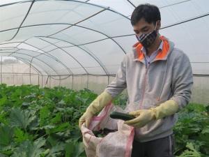 Thăm vườn rau số 1 tiên phong về quy mô công nghệ cao ở Thái Nguyên