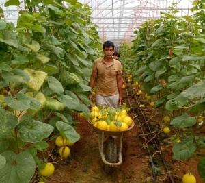 Thanh Hóa khuyến khích người dân đầu tư phát triển nông nghiệp công nghệ cao