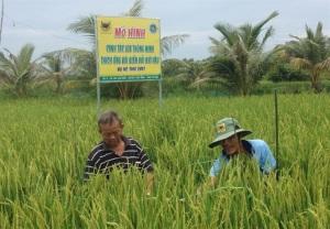Nhân rộng mô hình canh tác lúa thông minh thích ứng với biến đổi khí hậu