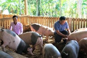 Trang trại thịt sạch đầu tiên ở Bình Định