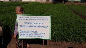 Chuyển giao kỹ thuật trồng rau VietGAP