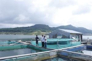 Quảng Nam phát triển toàn diện nghề nuôi thủy sản
