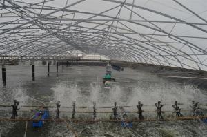 Công nghệ nuôi thủy sản là yếu tố then chốt