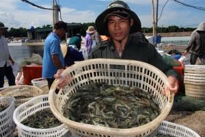 Nuôi trồng thủy sản ven biển bền vững