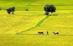 Hướng đi cho nông nghiệp Phú Xuyên