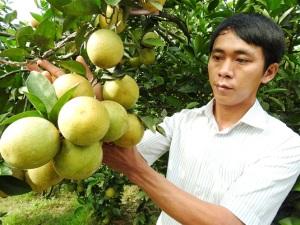 Cam sạch Vũ Quang: Khi từng quả cam được truy xuất nguồn gốc