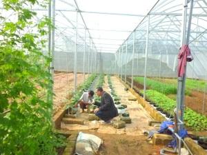 Đào tạo nghề nông nghiệp chuyển biến mạnh