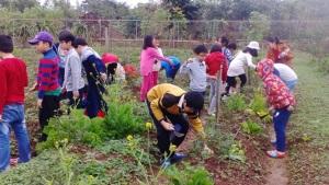 Đặc thù vùng rau an toàn ven đô: Long Biên phát triển du lịch nông nghiệp