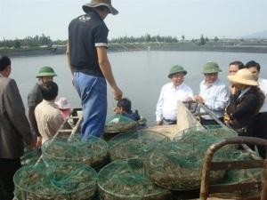 Hướng đến phát triển bền vững nghề nuôi tôm trên cát