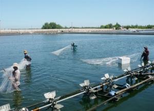 Quảng Bình: Phát triển trên 5.000ha nuôi thủy sản