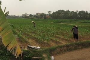 Bình Xuyên hỗ trợ SX nông nghiệp