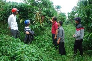 Ở nơi có 400 ha cà phê 20 năm không sử dụng thuốc sâu