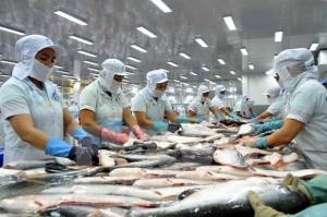 Cá tra tăng giá mạnh