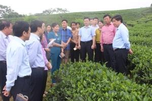 Nâng tầm chất lượng cây chè