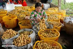 Cần Thơ: Liên kết, phát triển sản xuất nông sản chất lượng cao