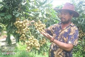 Hưng Yên ứng dụng hệ thống OTAS vào quản lý, cấp chứng nhận mã số vùng trồng