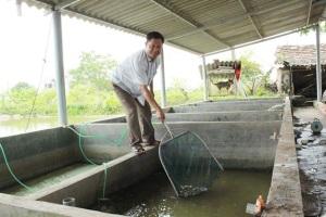 Làm chủ 3 cơ sở ương cá giống, lãi gần 1 tỷ đồng/năm
