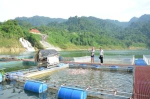 Sức sống trên hồ sinh thái Na Hang