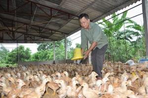 Ngăn chặn cúm gia cầm, hướng tới chăn nuôi bền vững