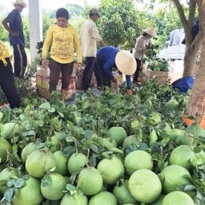 Bước tiến sản xuất nông sản sạch