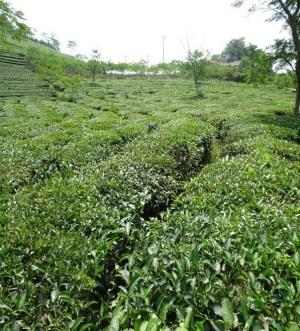 Nâng cao nhận thức làm nông sản an toàn theo tiêu chuẩn VietGAP