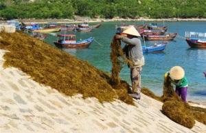 Khuyến nông Khánh Hòa: Nhiều mô hình hiệu quả