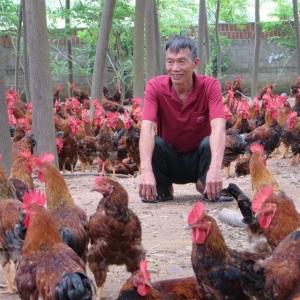Tỷ phú vùng đồi với trang trại chăn nuôi bài bản