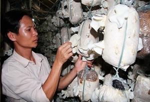 Đồng Nai tập trung nâng cao chất lượng nấm