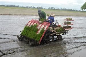 Kiên Giang: 8 huyện, thành phố chuyển đổi nông nghiệp bền vững