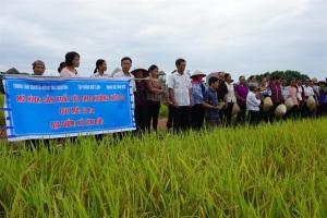 Lúa hữu cơ thay đổi nhận thức của nông dân