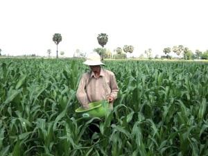 ĐBSCL: Phát triển chăn nuôi để giảm diện tích trồng lúa