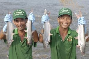 Môi trường nuôi trồng thủy sản - Thách thức lớn: Các giải pháp xử lý nước thải nuôi cá tra