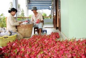 Hiểu đúng về dư lượng thuốc BVTV trong nông sản